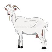 Раскраски коза