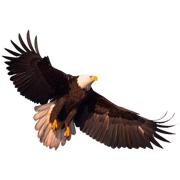 Раскраски Орел