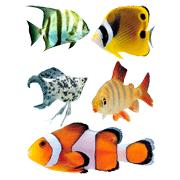 Раскраски Аквариумные рыбки