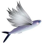 Раскраски Летучая рыба
