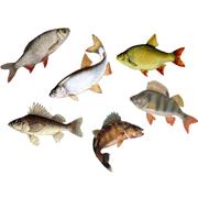 Раскраски Речные рыбы