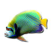 Раскраски Рыба Ангел