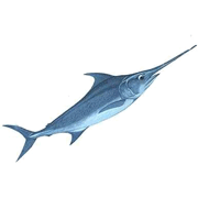Раскраски Рыба Меч