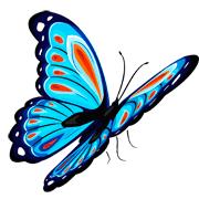 Раскраски Бабочка