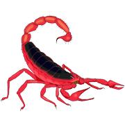 Раскраски Скорпион