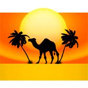 Раскраски Пустыня