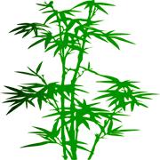 Раскраски Бамбук