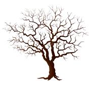 Раскраски Дерево без листьев