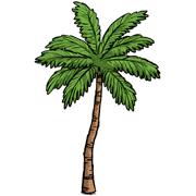 Раскраски Пальма