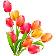 Раскраски Тюльпаны