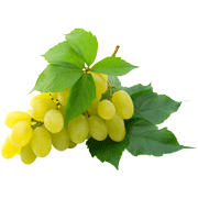 Раскраски Виноград