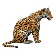 Раскраски Ягуар