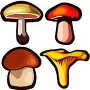 Раскраски Съедобные грибы