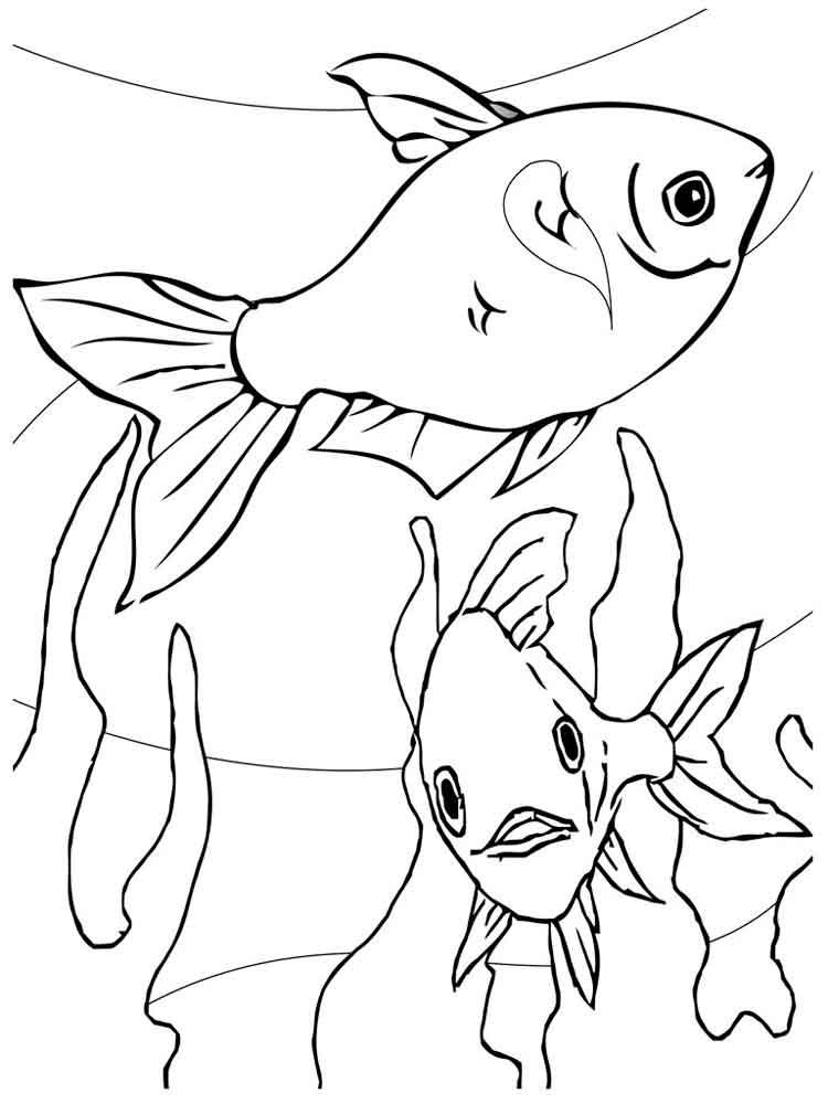 Картинки аквариумных рыбок раскраски