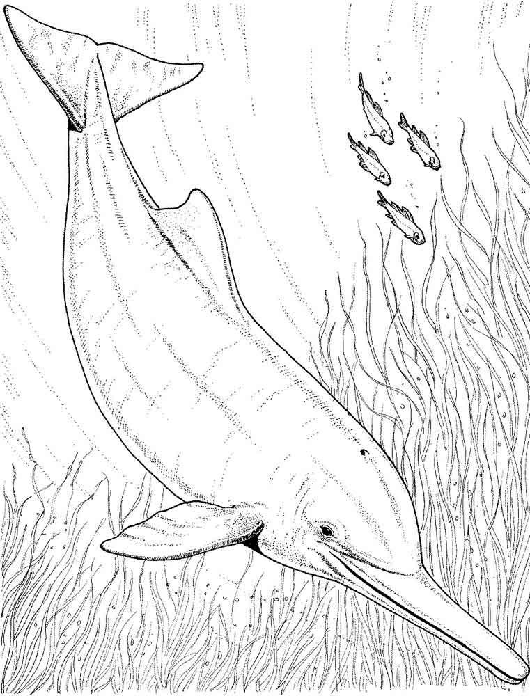 raskraski-delfin-22