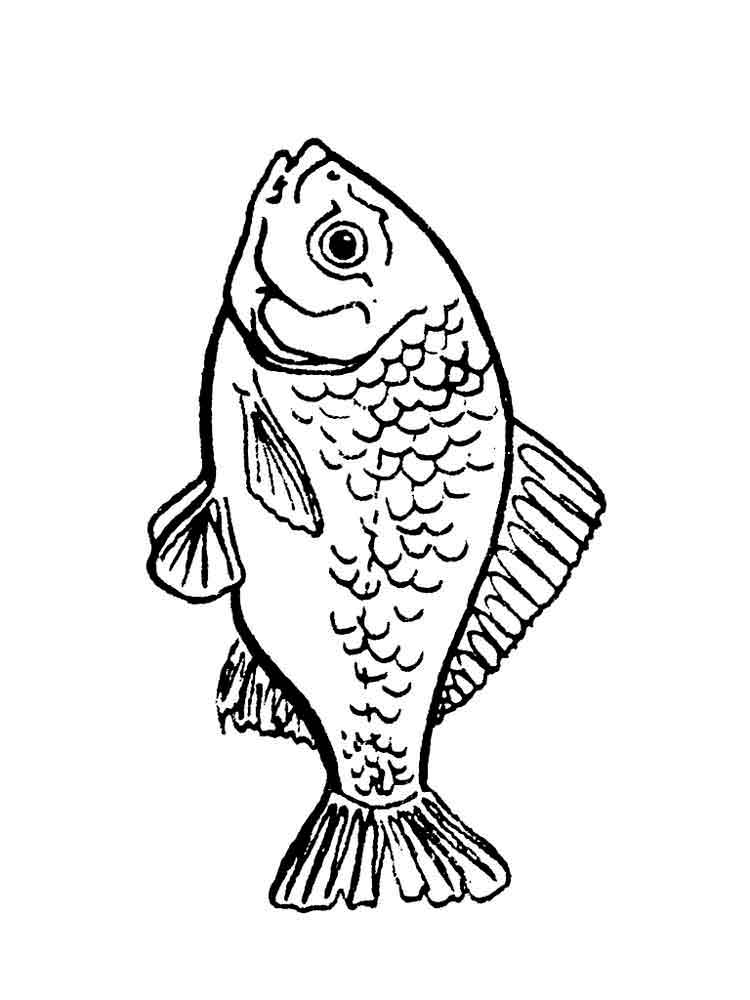 Однокласснику мужчине, рыбы картинки раскраски