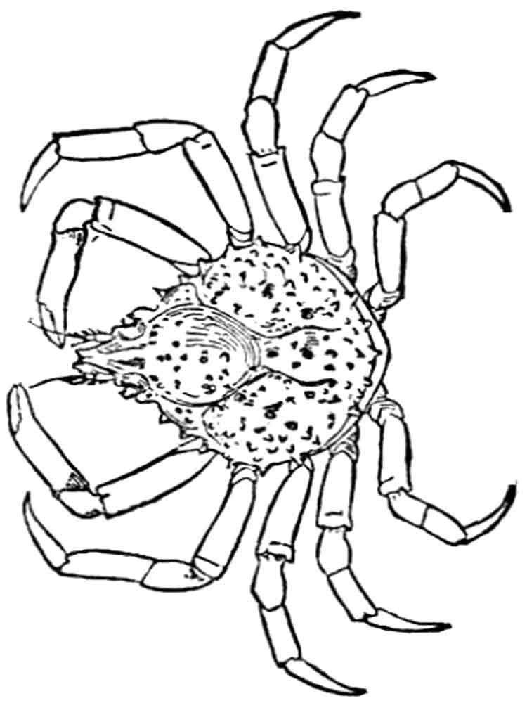 raskraski-krab-1