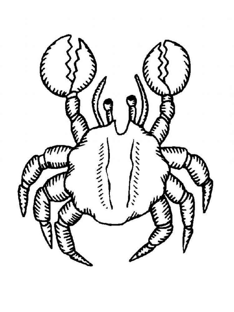 raskraski-krab-19
