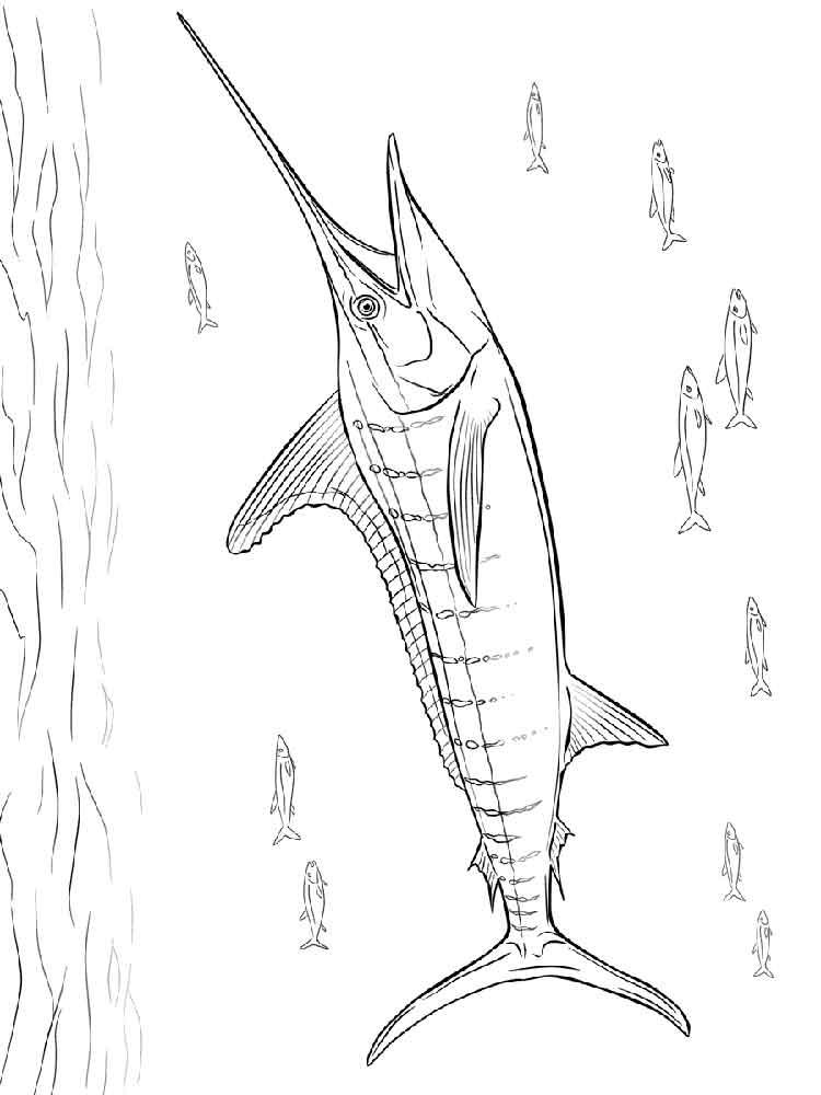 raskraski-marlin-1