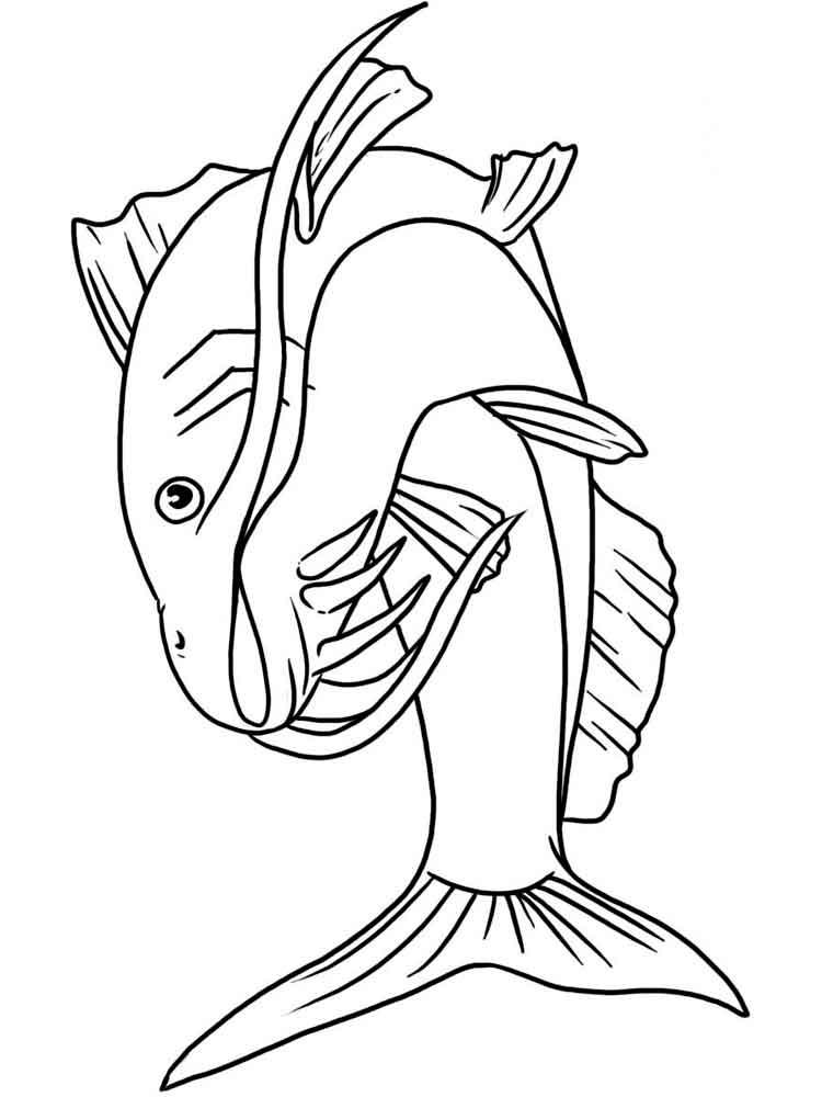 raskraski-rechnye-ryby-10