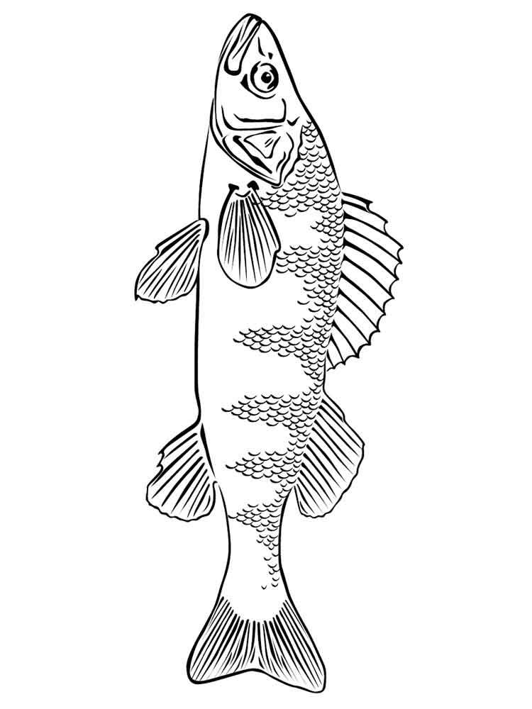 raskraski-rechnye-ryby-11