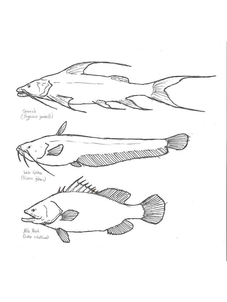 raskraski-rechnye-ryby-12