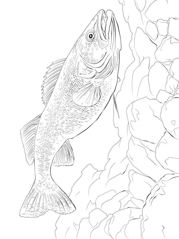 raskraski-rechnye-ryby-13