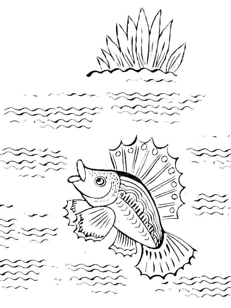raskraski-rechnye-ryby-14