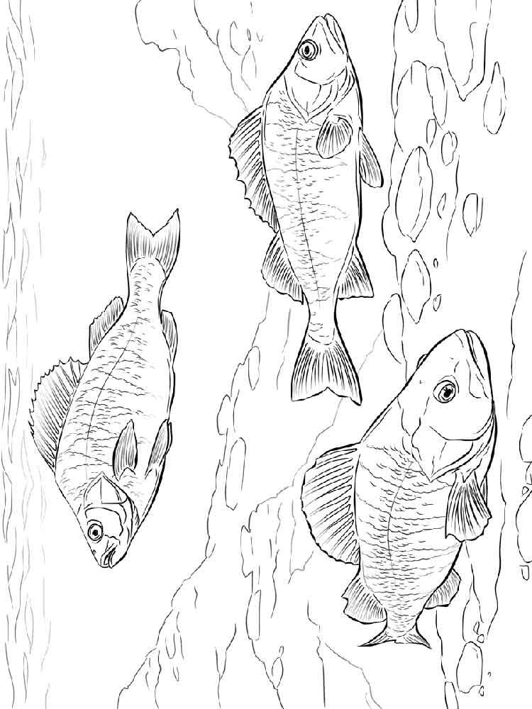 raskraski-rechnye-ryby-3