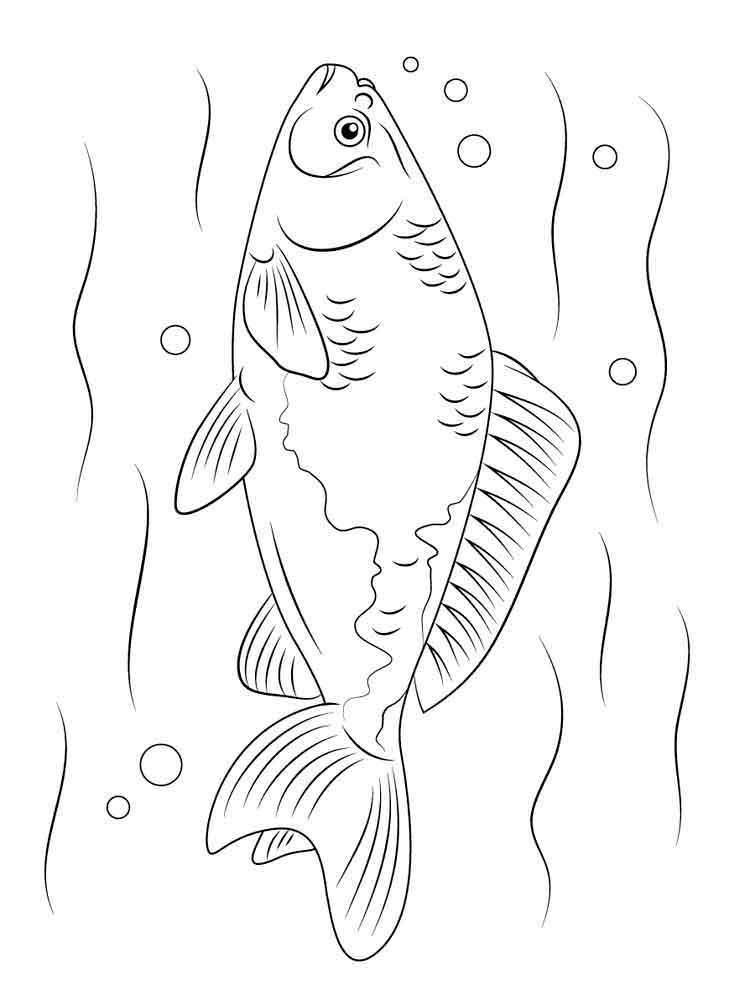 raskraski-rechnye-ryby-5