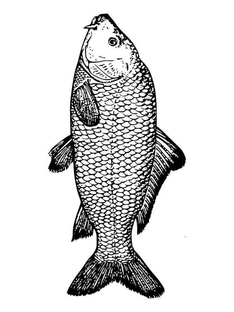 raskraski-rechnye-ryby-6