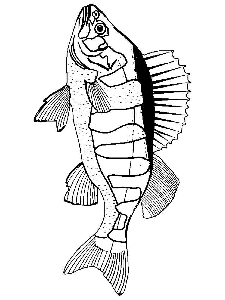 raskraski-rechnye-ryby-7