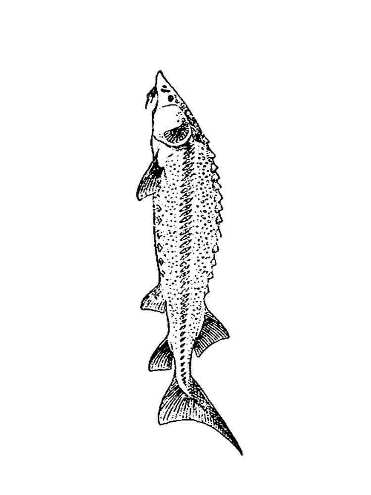 raskraski-rechnye-ryby-8