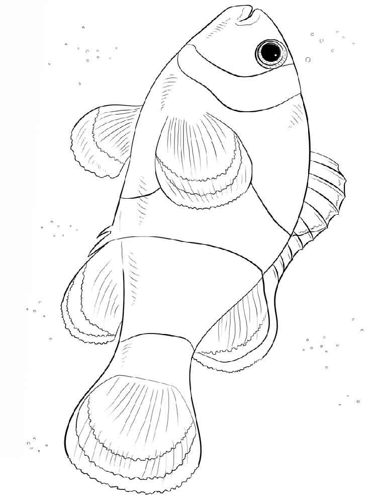 raskraski-riba-kloun-10
