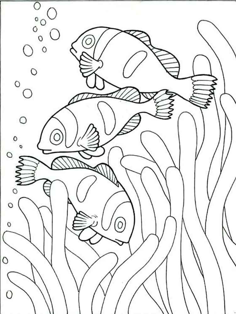 raskraski-riba-kloun-8