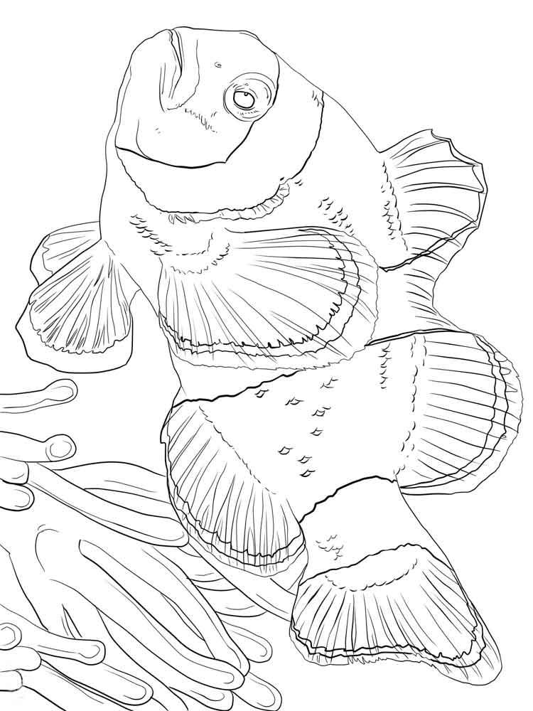raskraski-riba-kloun-9