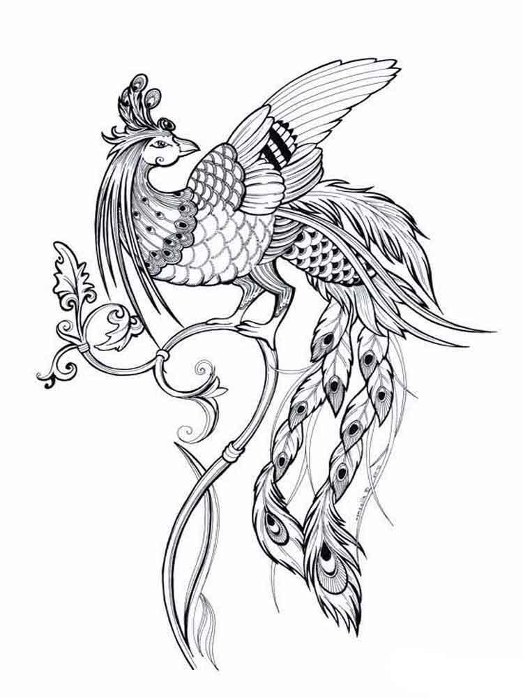 raskraski-zhar-ptica-6
