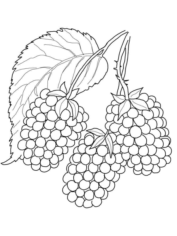 raskraski-jagoda-egevika-12
