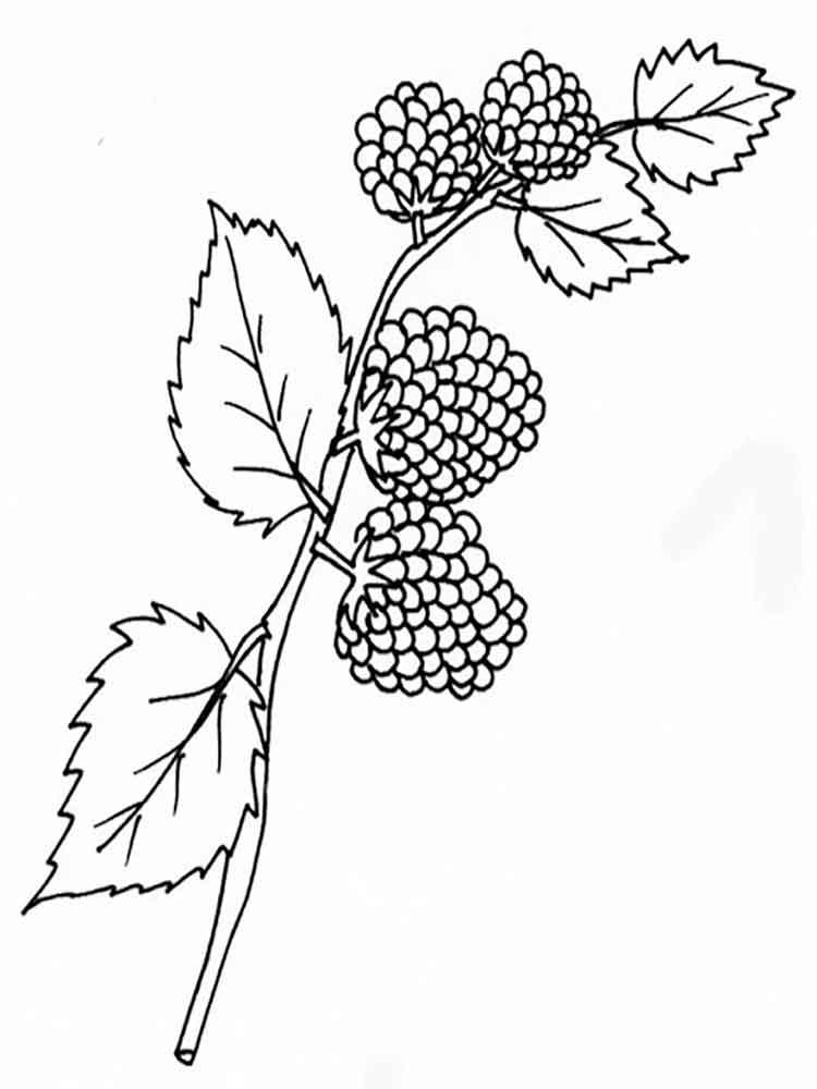 raskraski-jagoda-egevika-13