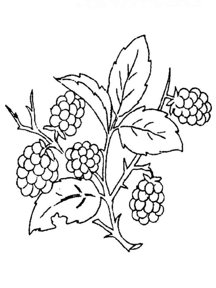 raskraski-jagoda-egevika-4