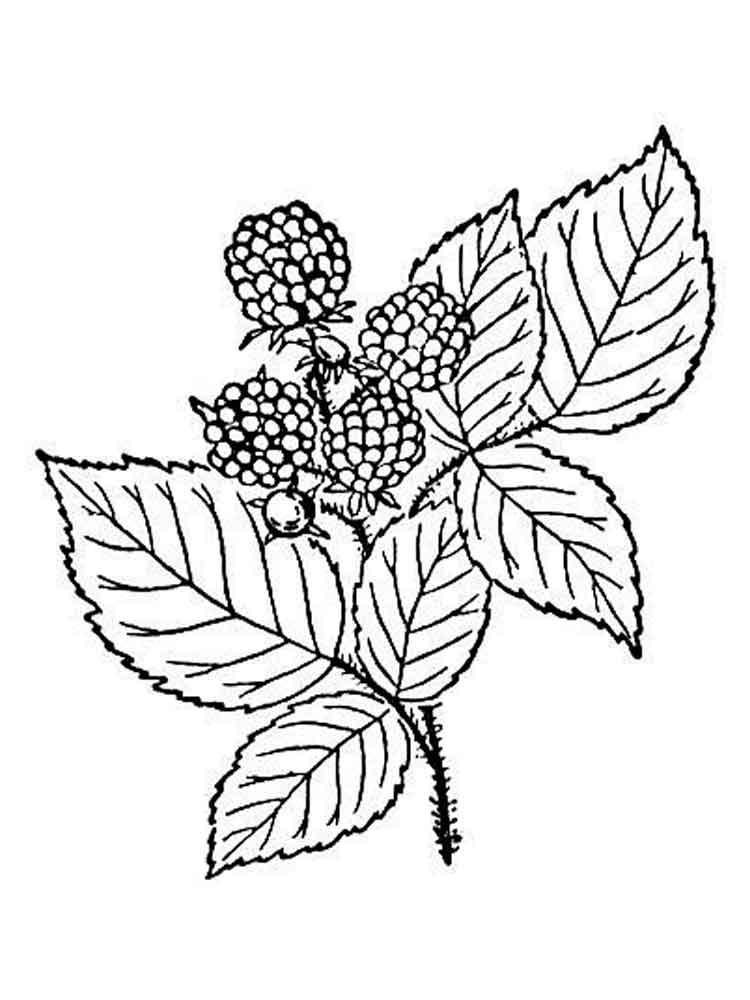 raskraski-jagoda-egevika-5