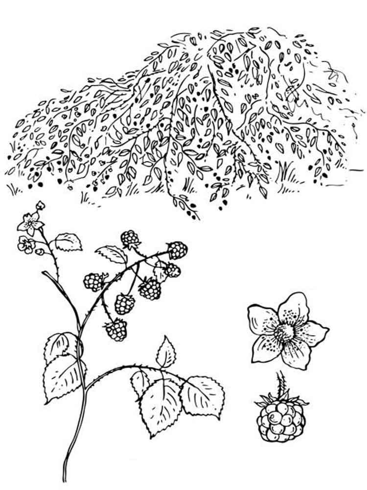 raskraski-jagoda-egevika-6