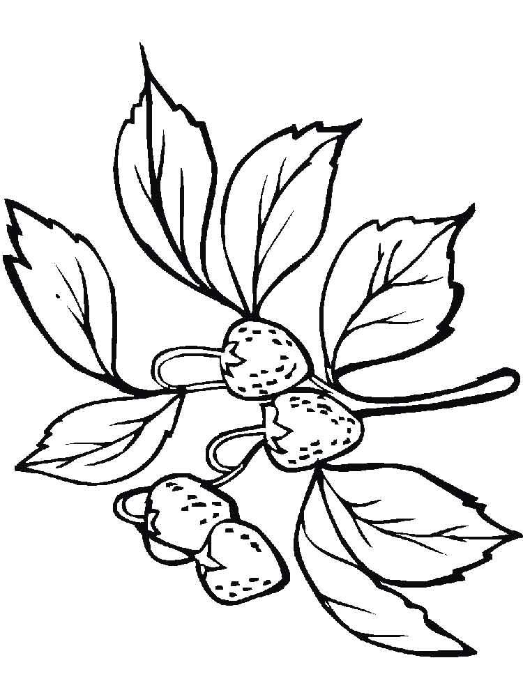 raskraski-jagoda-klubnika-17