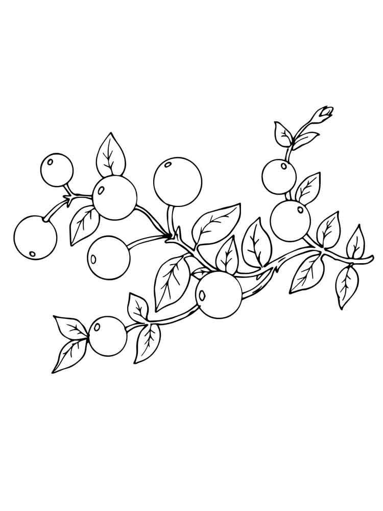 raskraski-jagoda-klukva-2