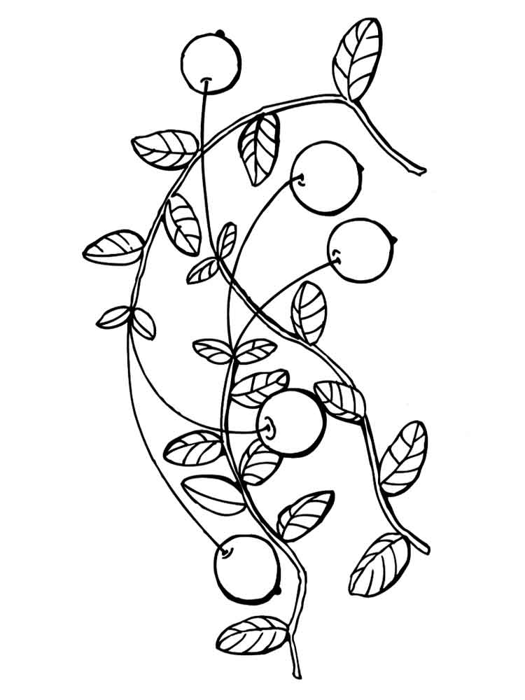 raskraski-jagoda-klukva-4