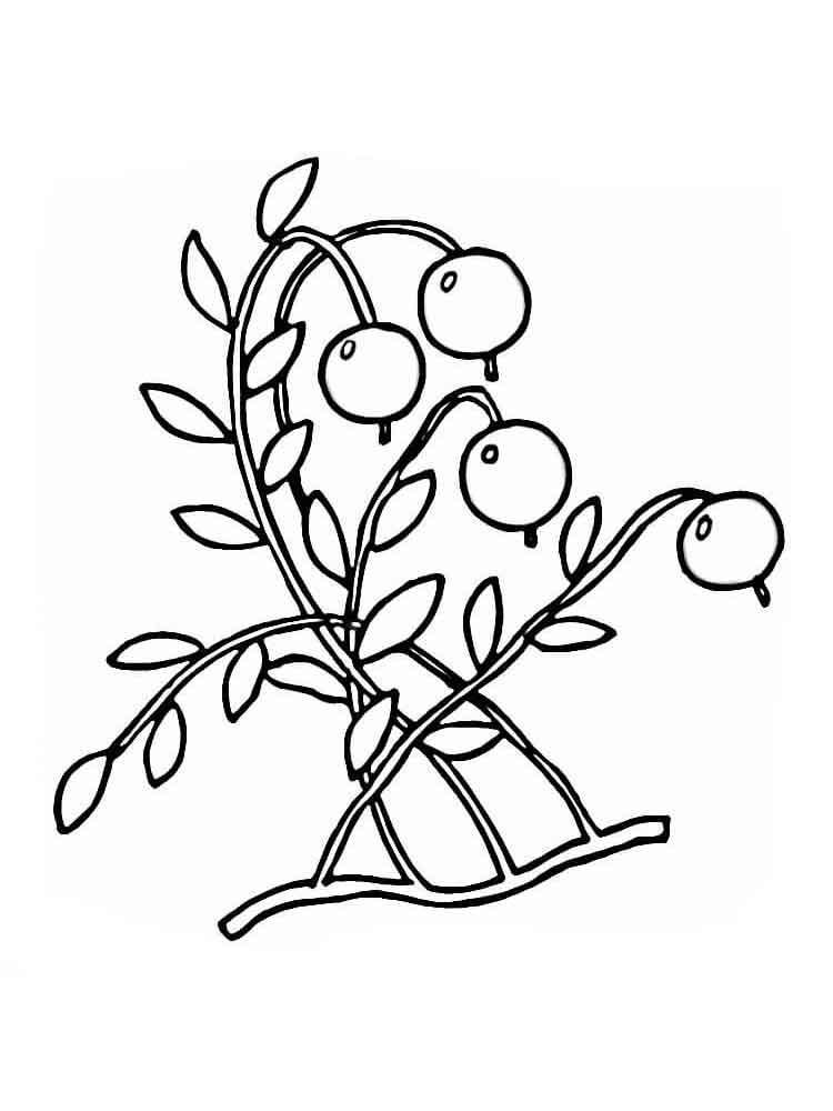 raskraski-jagoda-klukva-5