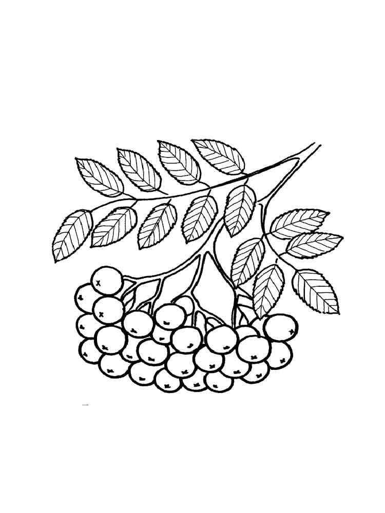 raskraski-jagoda-rjabina-10