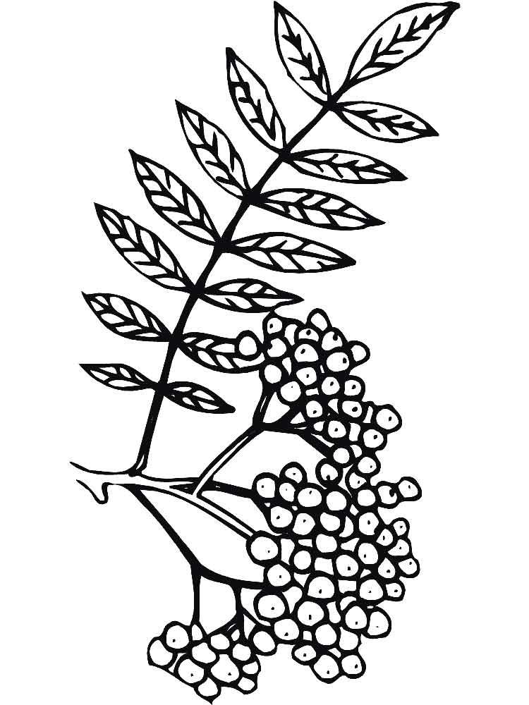 raskraski-jagoda-rjabina-12