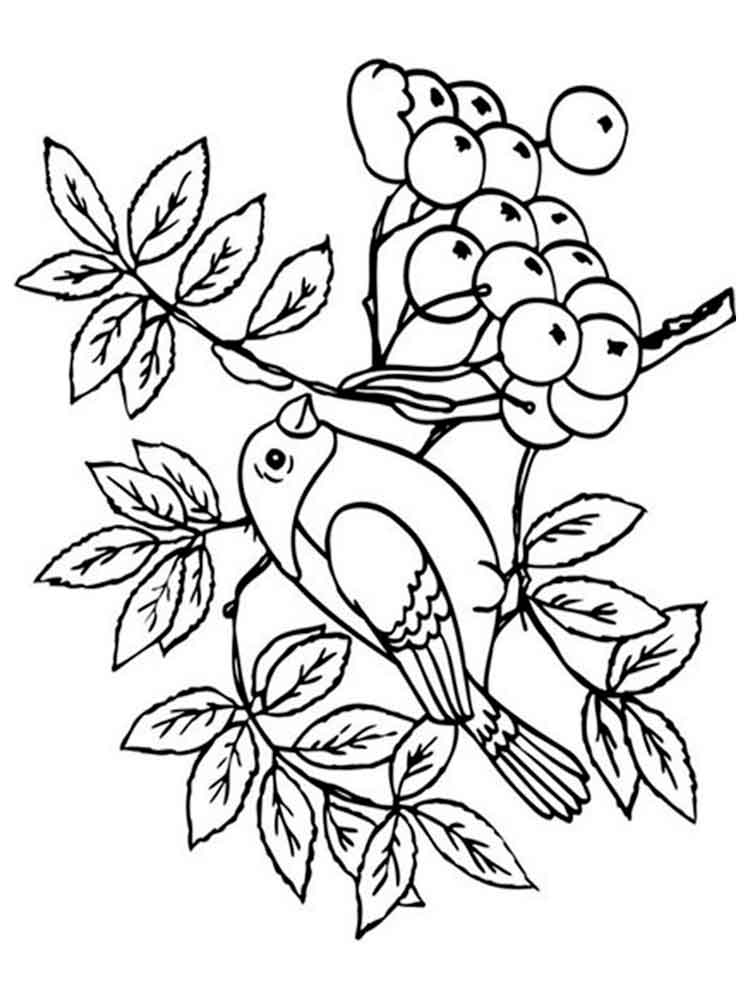 Рябинка картинка раскраска для детей