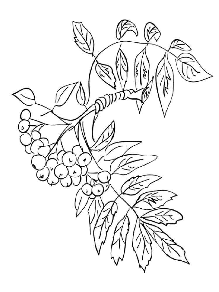 raskraski-jagoda-rjabina-7